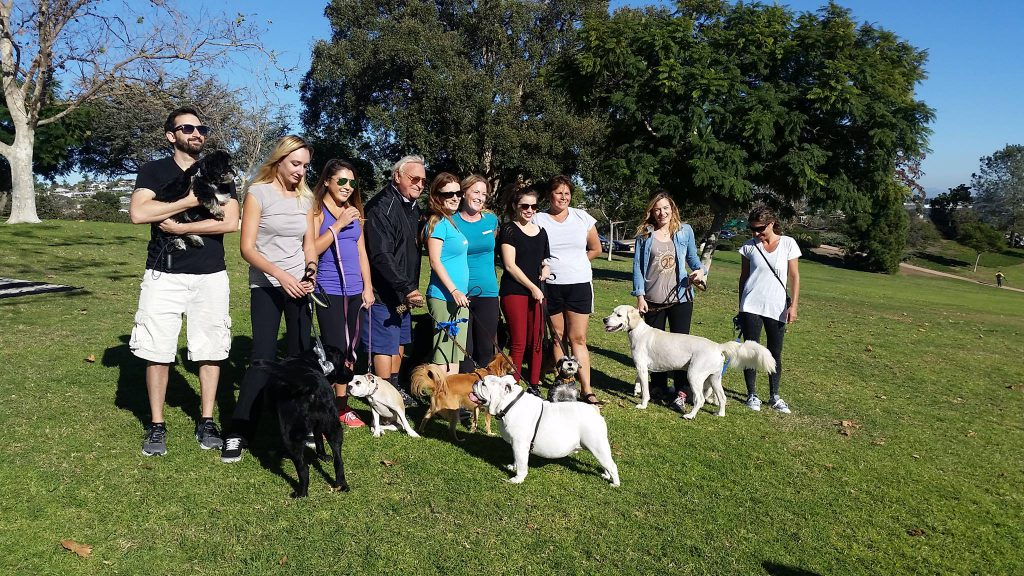5 Very Important Advantages of Dog Walking