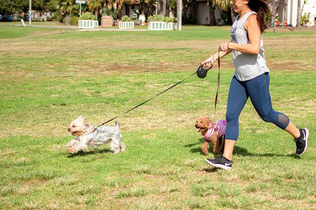 Doggie Field Day