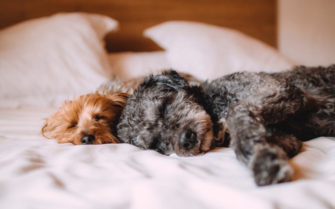 How Much Should Your Dog Sleep?