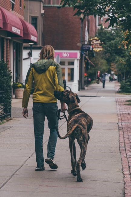 Dog walking tips for a pleasant dog walking experience
