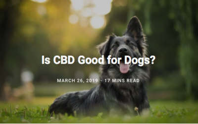 Dog Owner's Guide to CBD