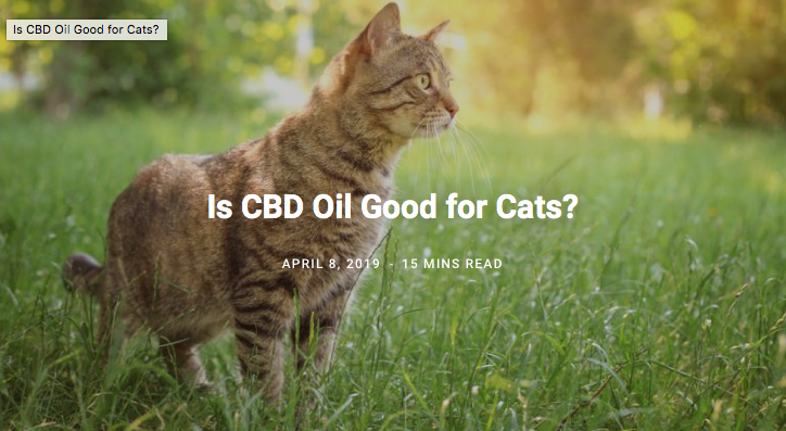 Cat Owner's Guide to CBD