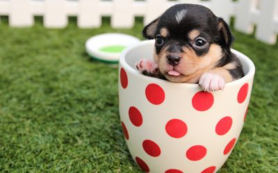Basic Tips To Care For Dog Puppies