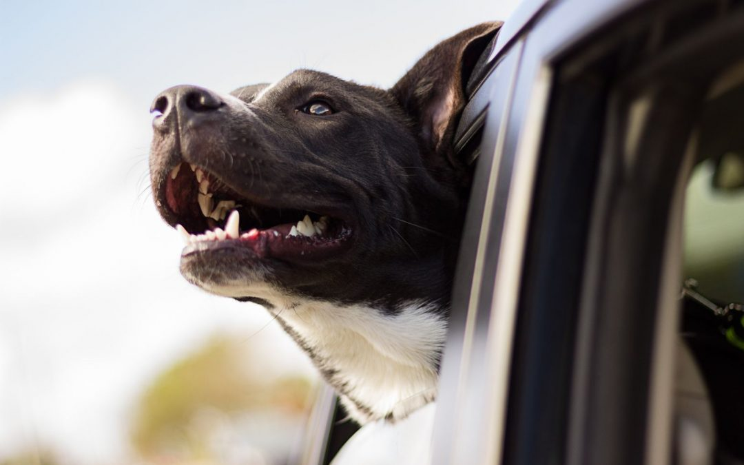 Tips for Traveling by Car & Boat with your dog